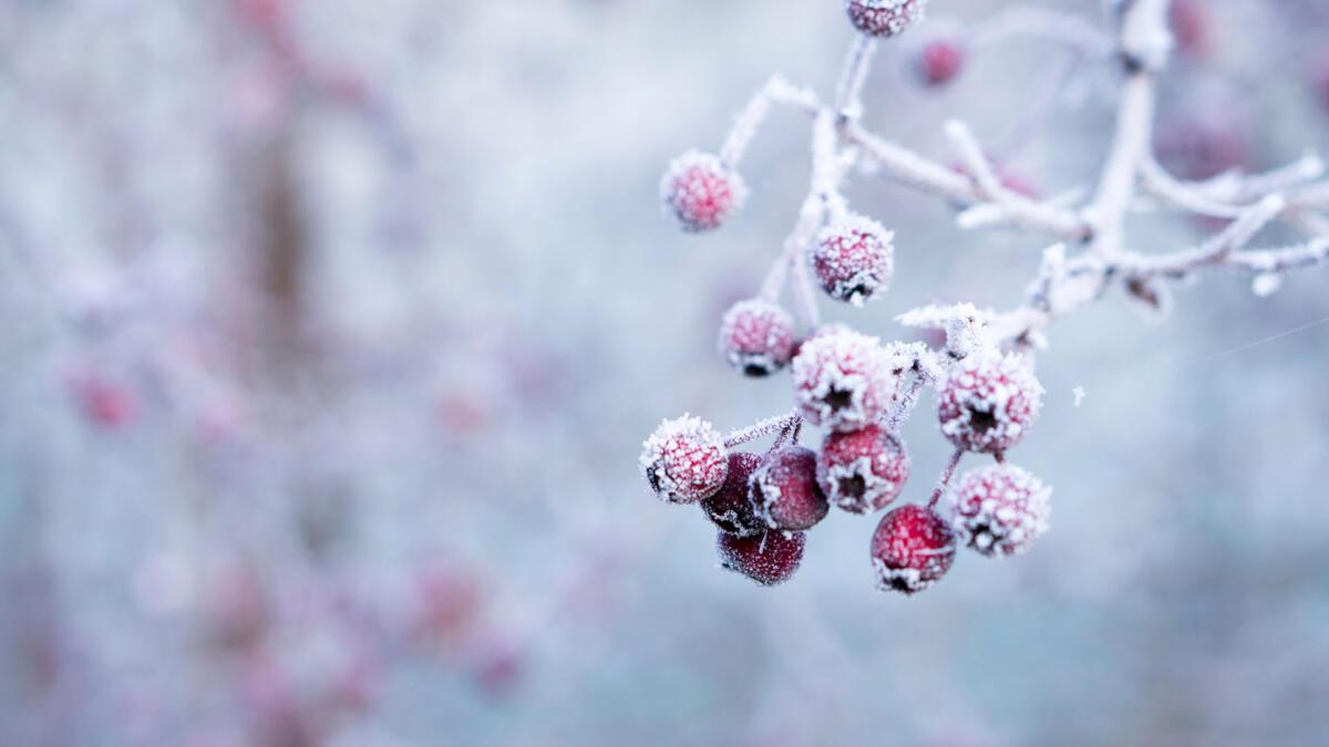 Winter in der TCM